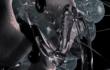 FVBIO - Turbid (c) Mer Marin